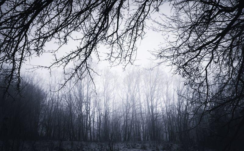 Fondo torcido oscuro de las ramas en el ajuste frecuentado foto de archivo