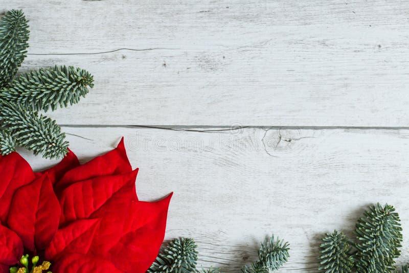 Fondo tradizionale di Natale con il fiore della stella di Natale