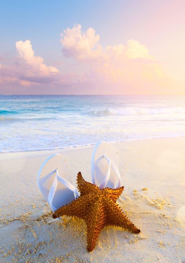 Fondo tropical de la playa del verano; borde de las estrellas de mar, de la arena y del agua imagenes de archivo