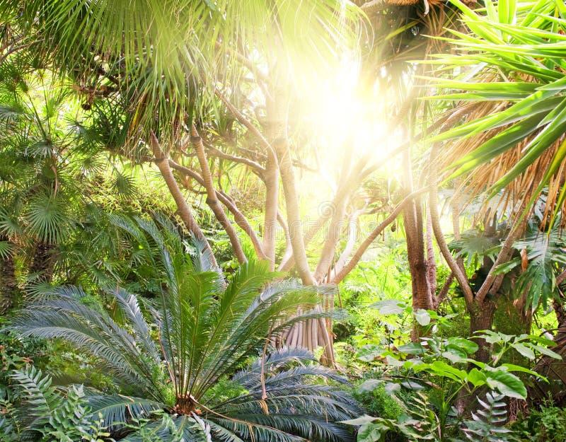 Fondo tropical del bosque foto de archivo libre de regalías