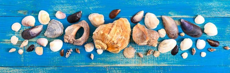 Fondo tropical del mar Diversas cáscaras en los tableros azules, visión superior bandera Tema del verano fotos de archivo libres de regalías