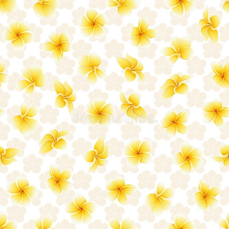 Fondo tropical del vector de las flores del verano del modelo del plumeria incons?til del frangipani fotografía de archivo