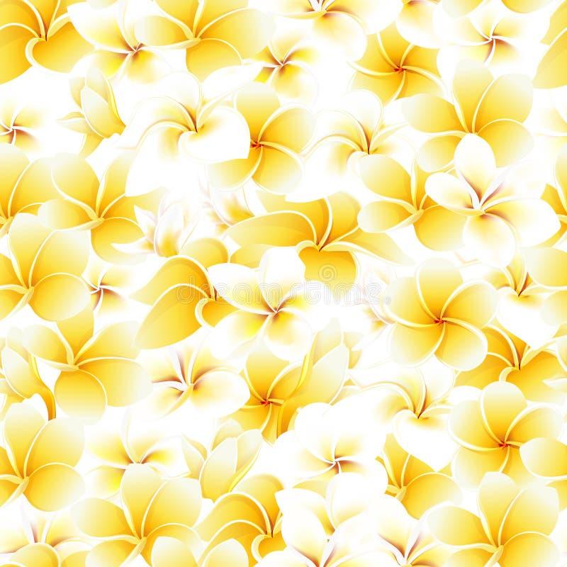 Fondo tropical del vector de las flores del verano del modelo del plumeria incons?til del frangipani foto de archivo
