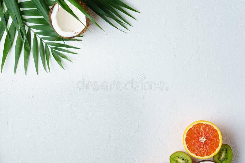 Fondo tropical del verano, concepto de las vacaciones imágenes de archivo libres de regalías