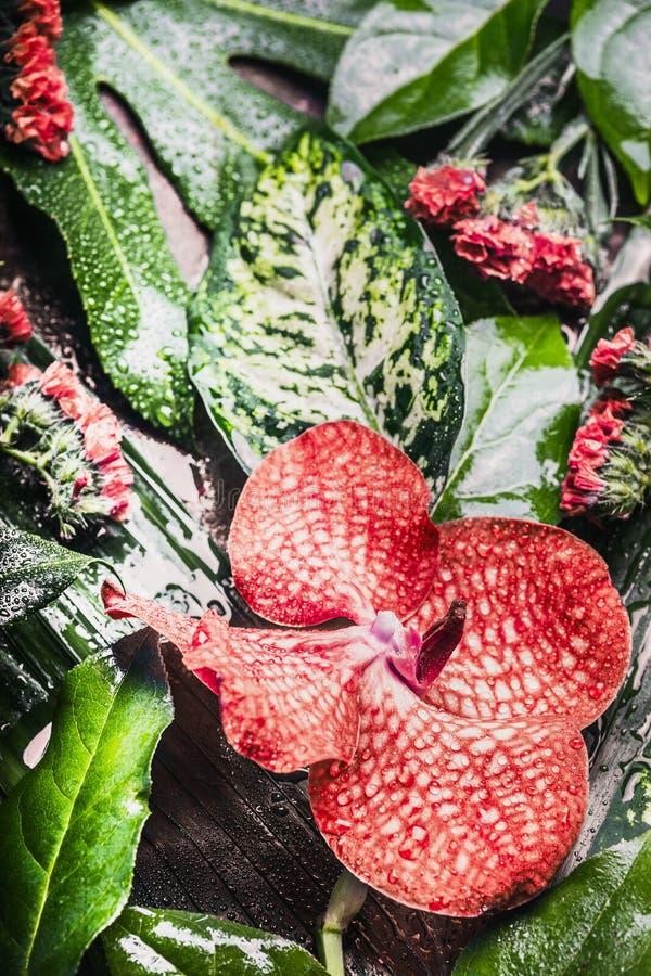 Fondo tropicale creativo della natura con le varie foglie della giungla e della palma ed i fiori rossi, vista superiore fotografie stock libere da diritti