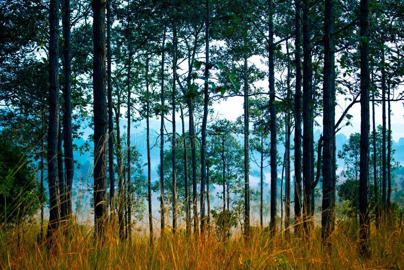 Fondo tropicale della foresta della giungla nel tono blu durante la condizione asciutta fotografia stock libera da diritti