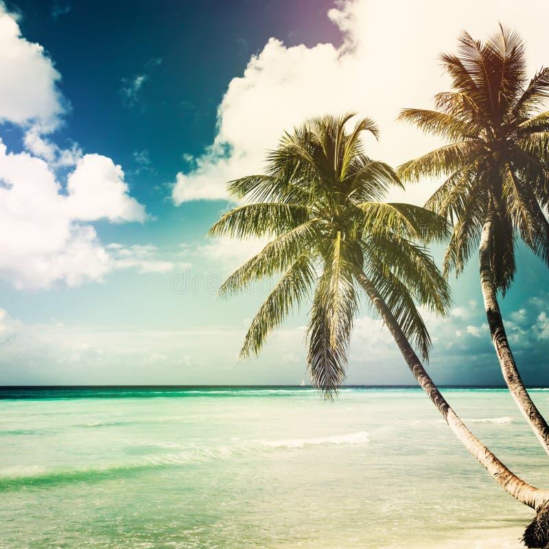 Fondo tropicale della natura con il cocco immagine stock libera da diritti
