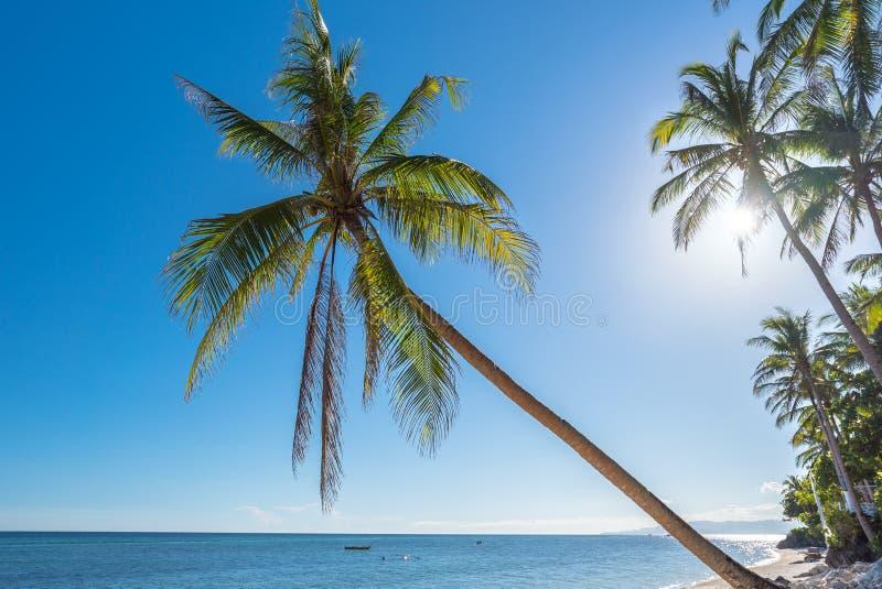 Fondo tropicale della spiaggia dall'isola di Bohol della spiaggia di Anda fotografia stock libera da diritti
