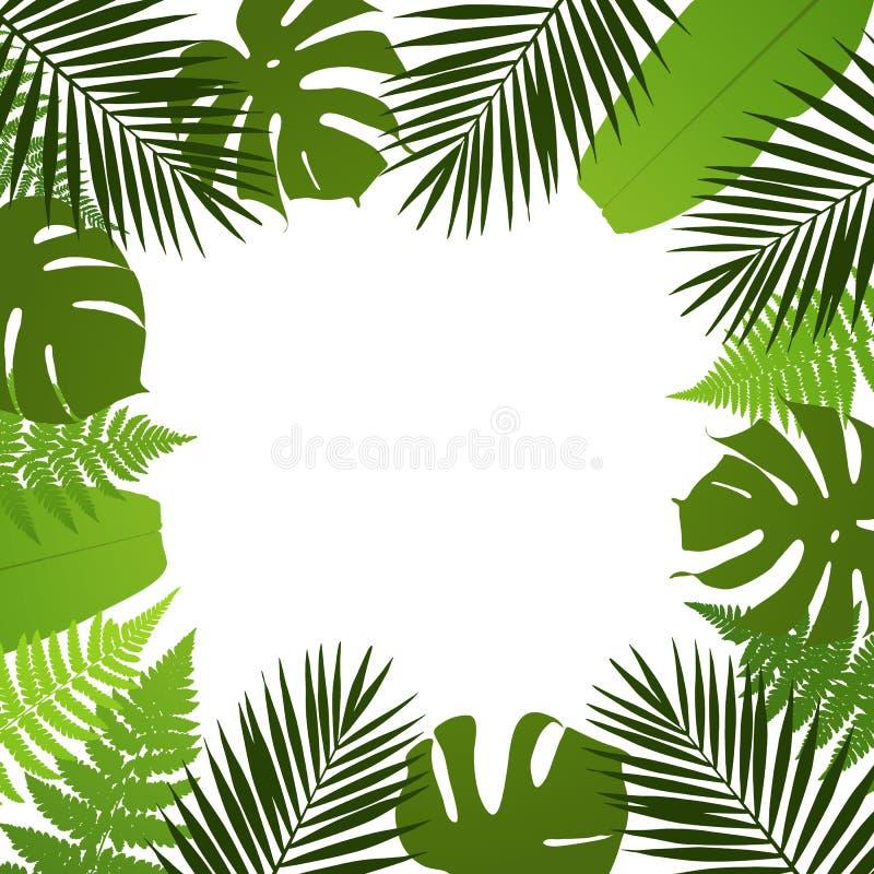 Fondo tropicale delle foglie Pagina con le foglie della palma, della felce, di monstera e della banana illustrazione vettoriale