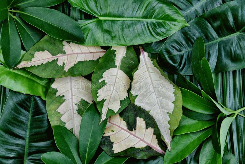 Fondo tropicale delle foglie verdi, concetto naturale del modello immagini stock