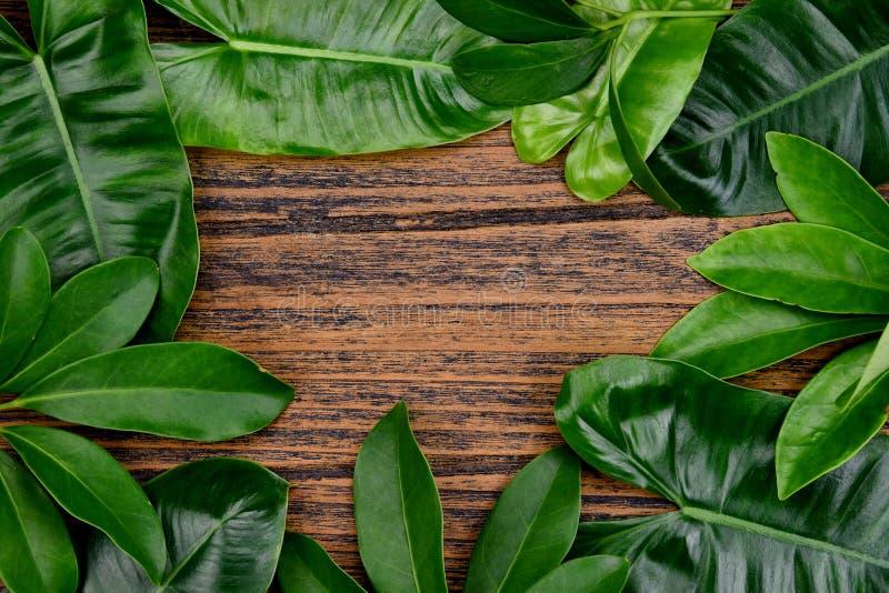 Fondo tropicale delle foglie verdi sulla struttura di legno con lo spazio nel centro, concetto naturale della copia del modello immagini stock