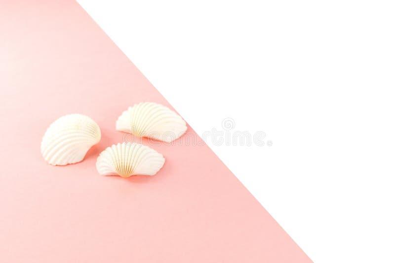 Fondo tropicale di vacanza di estate Conchiglie bianche su un fondo rosa Copi lo spazio, vista superiore fotografia stock libera da diritti