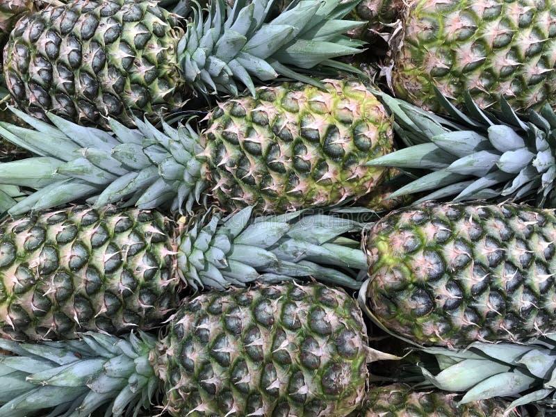 Fondo tropicale fresco dell'ananas immagine stock libera da diritti