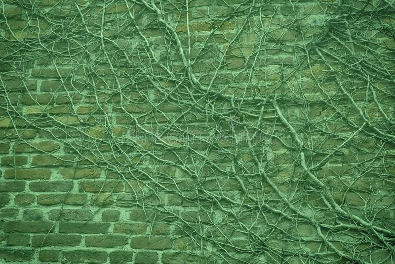 Fondo ultra verde della pietra del muro di mattoni - struttura per le rocce continue fotografia stock libera da diritti