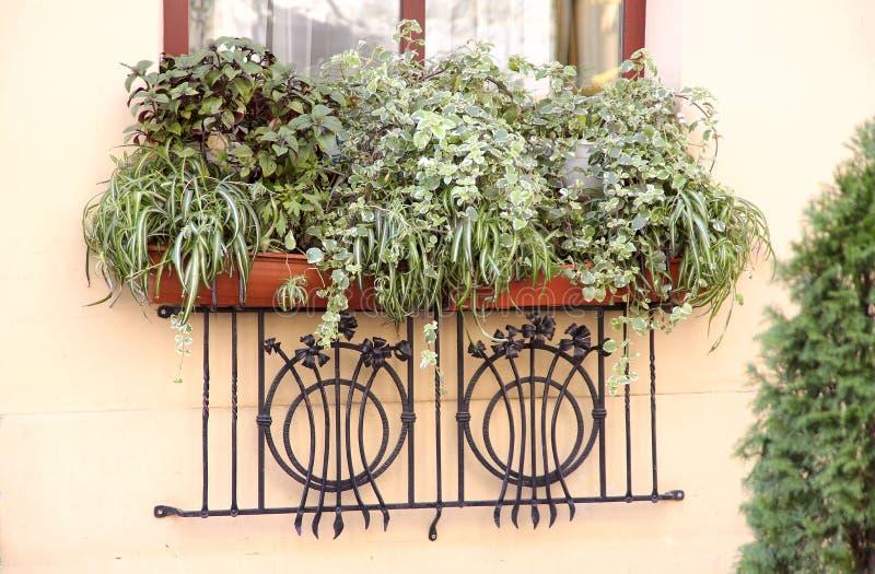 Fondo Una ventana maravillosamente adornada de un edificio residencial con la vida de las plantas verdes afuera fotografía de archivo libre de regalías