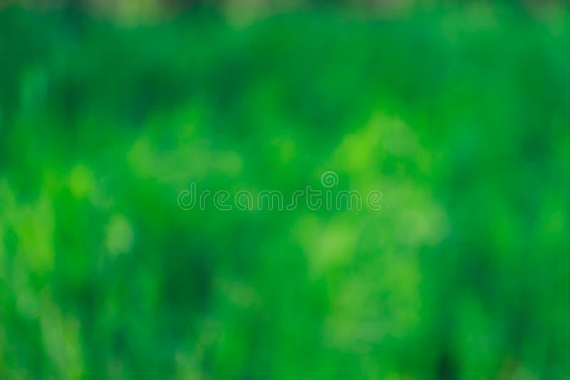 Fondo unfocused verde, hierba borrosa, verano, fondo del extracto de la primavera foto de archivo