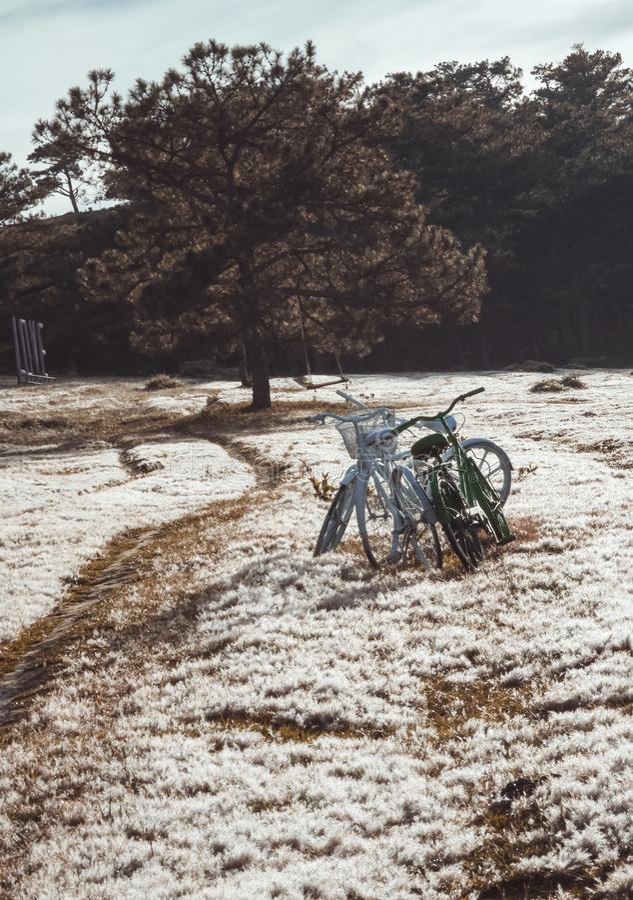 Fondo unico con le biciclette concetto, rugiada su erba rosa all'alba fotografie stock