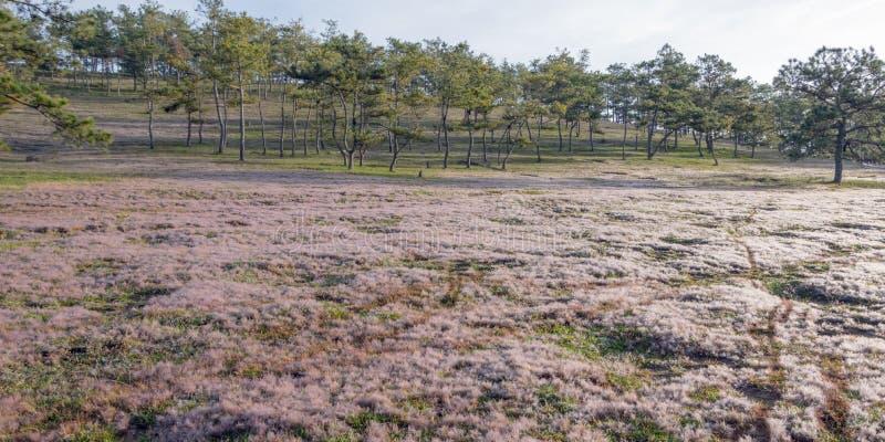 Fondo unico con le biciclette concetto, rugiada su erba rosa alla parte 5 di alba fotografia stock libera da diritti