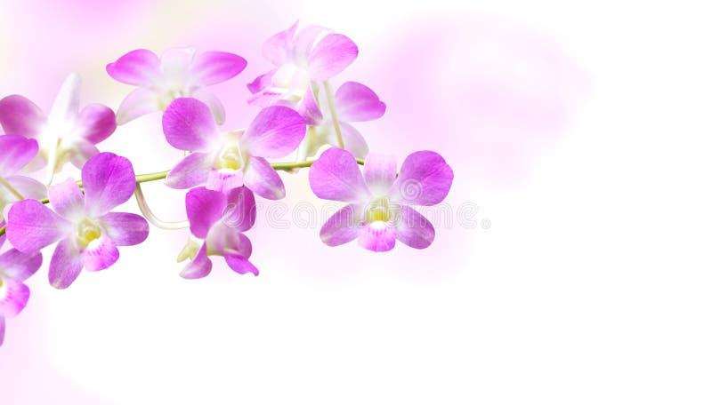 Fondo vago con i fiori dell'orchidea immagine stock libera da diritti