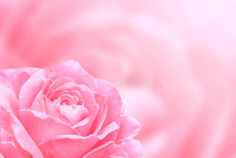 Fondo vago con la rosa di colore rosa immagini stock libere da diritti
