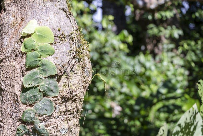 Fondo vago della natura con la flora della foresta pluviale del bacino del Rio delle Amazzoni nel Sudamerica fotografie stock libere da diritti