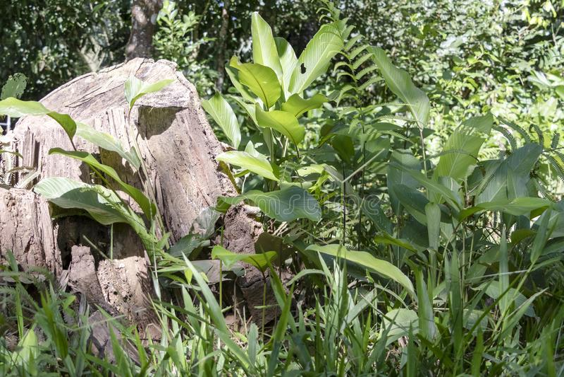 Fondo vago della natura con la flora della foresta pluviale del bacino del Rio delle Amazzoni nel Sudamerica fotografia stock