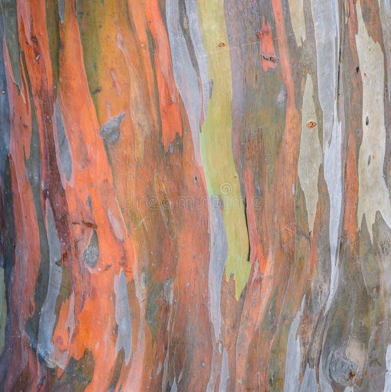 Fondo variopinto di struttura della corteccia di albero immagini stock