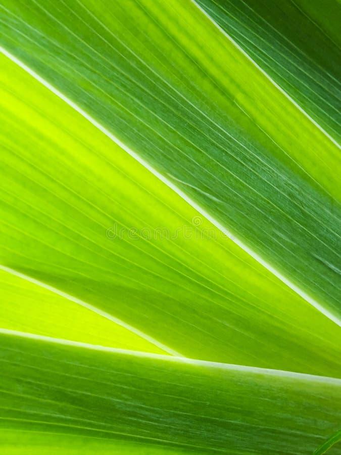 Fondo verde fotos de archivo libres de regalías