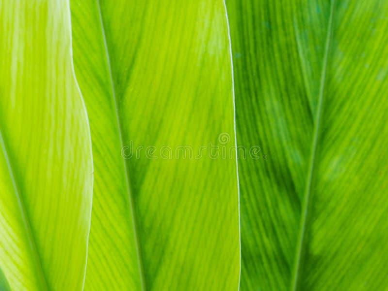 Fondo verde fotografía de archivo