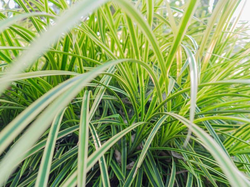 Fondo verde abstracto de la hoja, hojas verdes foto de archivo