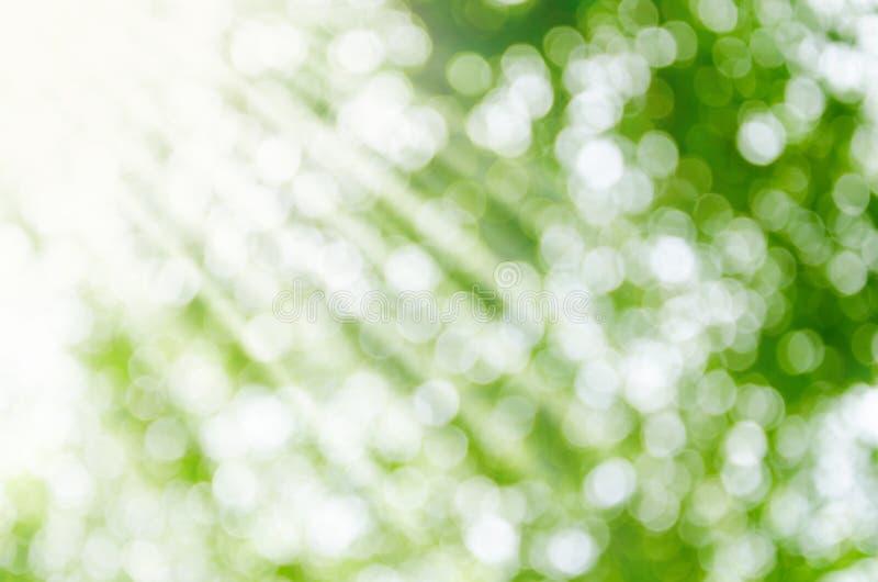 Fondo verde abstracto soleado de la naturaleza fotografía de archivo libre de regalías