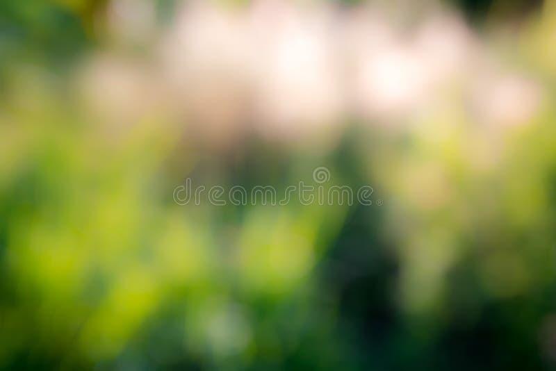 Fondo verde astratto soleggiato della natura, fuoco selettivo fotografie stock libere da diritti