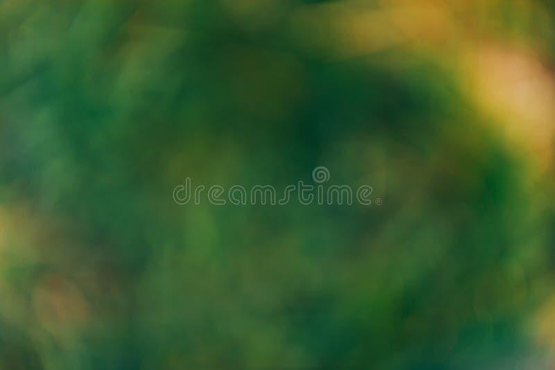 Fondo verde astratto soleggiato di erba, fondo vago della natura, unfocused fotografia stock