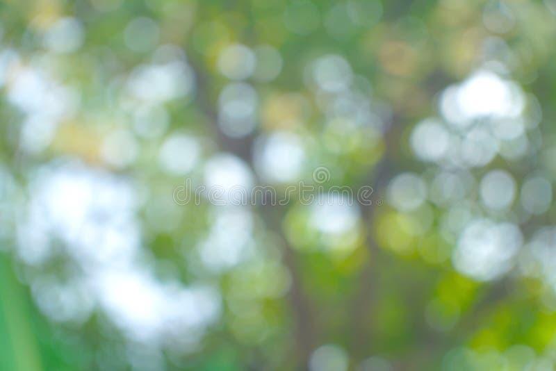 Fondo verde borroso del bokeh en el parque natural Concepto de la ecolog?a imagen de archivo