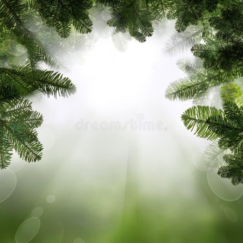 Fondo verde con la ramita del árbol de abeto Frontera abstracta con Boken imágenes de archivo libres de regalías