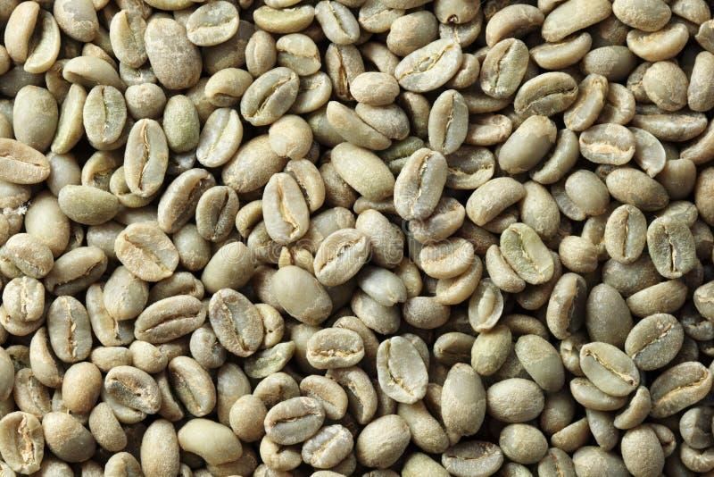 Fondo verde de grano de café imagenes de archivo