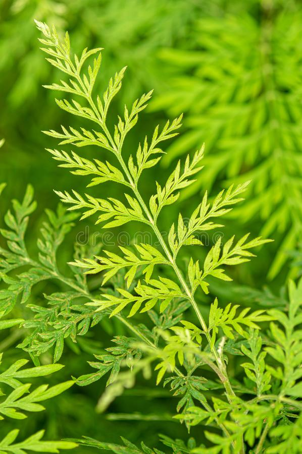 Fondo verde de la hoja foto de archivo