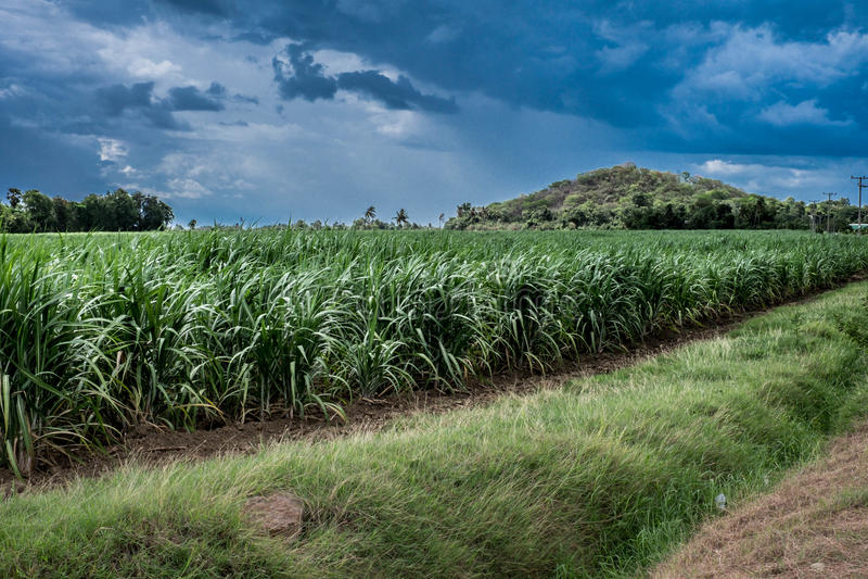 Fondo verde de la montaña de Tailandia del campo de la caña de azúcar imagenes de archivo