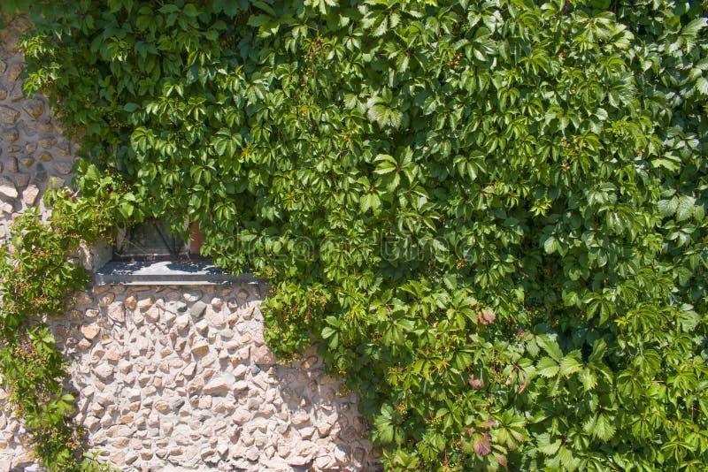 Fondo verde de la textura de la pared imagenes de archivo
