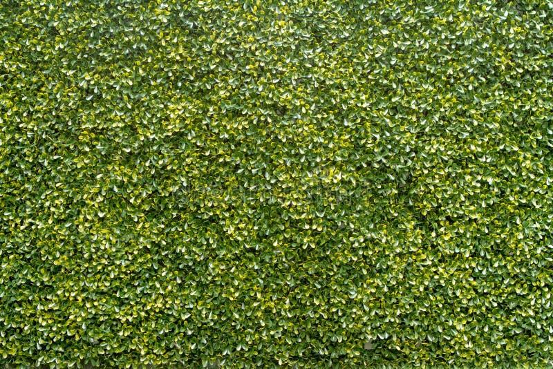 Fondo verde de la textura del árbol fotografía de archivo