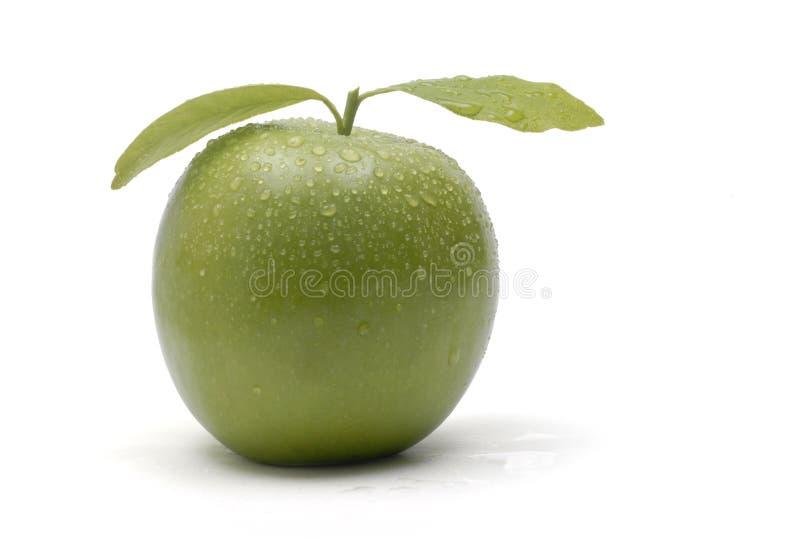 Fondo verde del blanco de la manzana fotos de archivo libres de regalías
