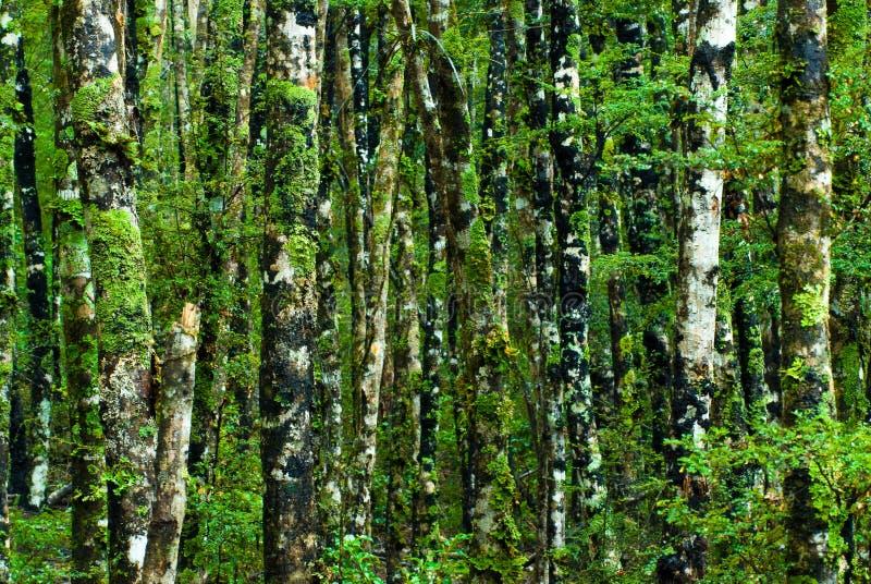 Fondo verde del bosque fotos de archivo libres de regalías