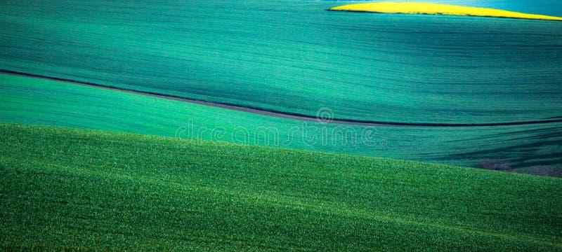 Fondo verde del extracto del campo de la primavera fotos de archivo