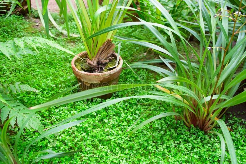 Fondo verde del jardín con las plantas verdes en maceta vieja del fasion imagen de archivo libre de regalías