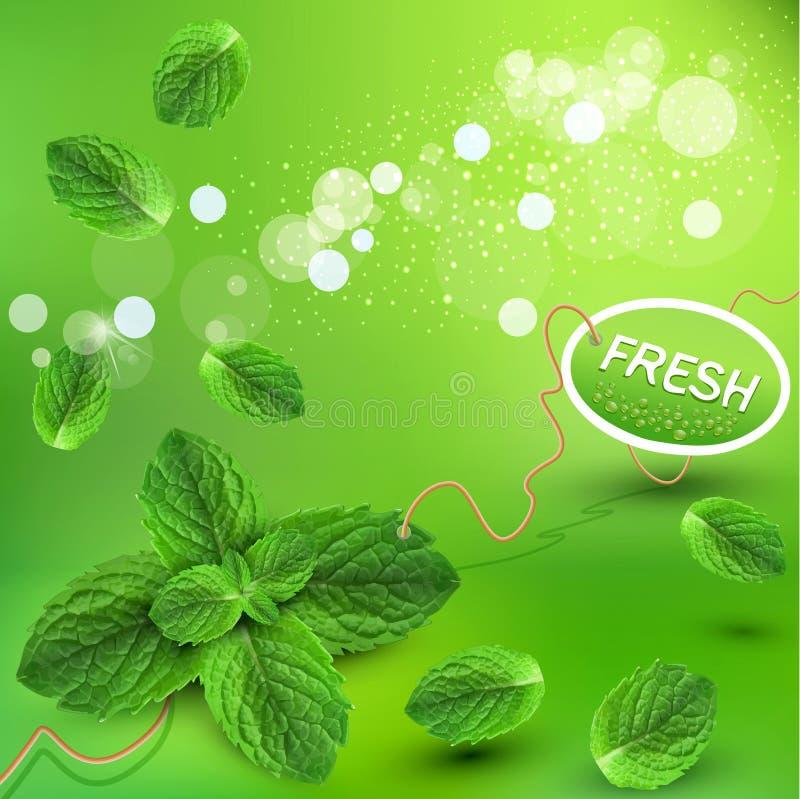 Fondo verde del vector con las hojas de menta fresca libre illustration