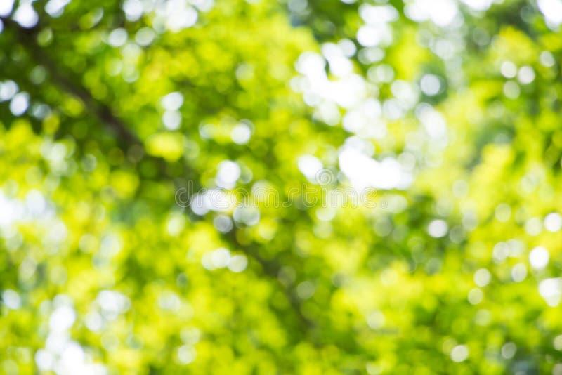 Fondo verde della natura, fuoco selettivo fotografia stock