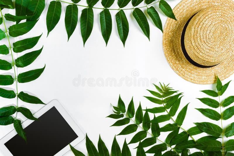 Fondo verde di bianco del haton dei rami, della compressa e della paglia della foglia Disposizione piana, vista superiore fotografia stock