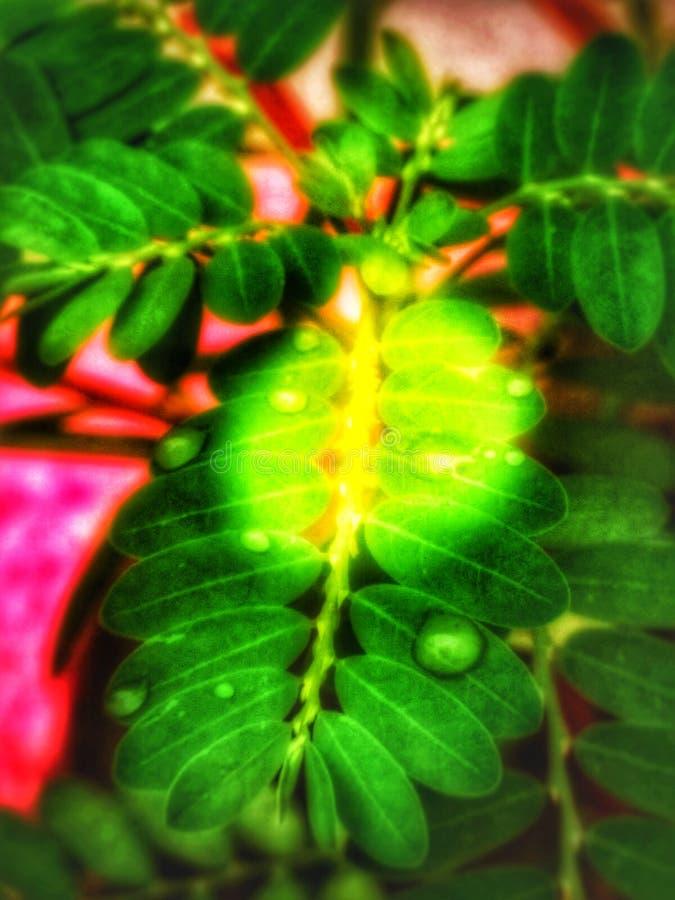 Fondo verde di immagine della foglia | immagini naturali fotografie stock