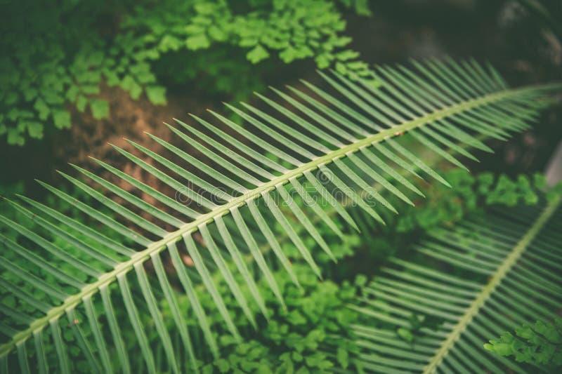 Fondo verde esotico delle foglie tropicali, estate alla moda alla moda fotografia stock