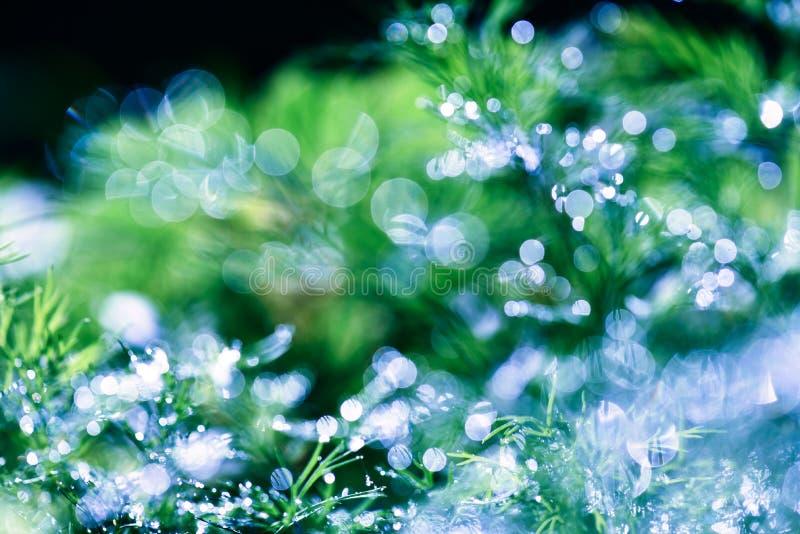 Fondo verde floreale naturale defocused e vago astratto con bello bokeh, rugiada su erba immagini stock
